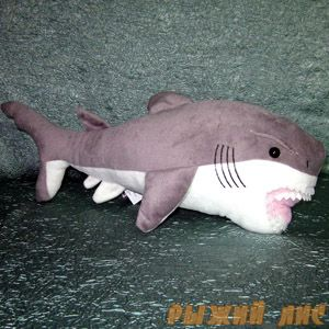 Акула Челли