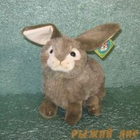 Заяц коричневый