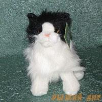 Котёнок чёрно-белый